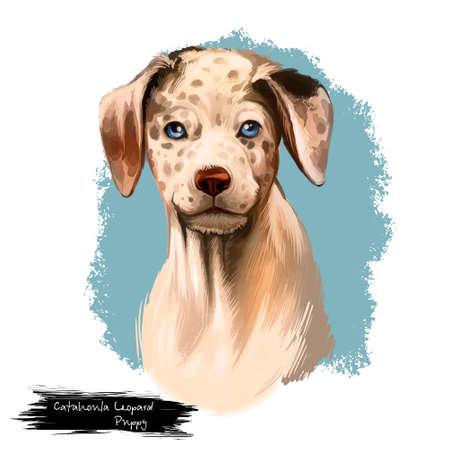Catahoula Leopard dog breed isolated on white digital art illustration. Catahoula Cur American dog breed, Leopard Dog Louisiana. Cute pet hand drawn portrait. Graphic clipart design realistic animal Фото со стока