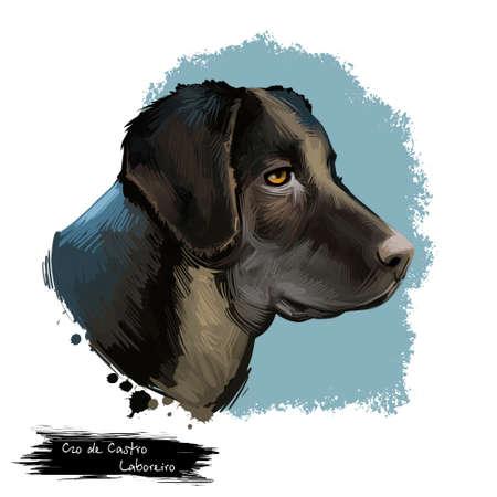 Cão de Castro Laboreiro dog breed isolated on white background digital art illustration. Dog from Castro Laboreiro, Portuguese Cattle Dog Watch Dog, dog breed of the livestock guardian dog type