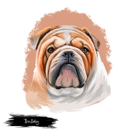Bulldog dog breed isolated on white background digital art illustration. Medium-sized breed of dog English Bulldog or British Bulldog muscular, hefty dog with wrinkled face, distinctive pushed-in nose Stock Photo