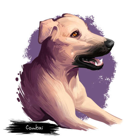 Combai, Kombai, Indian Terrier dog digital art illustration isolated on white background. Indian origin guardian dog. Cute pet hand drawn portrait. Hand drawn graphic clip art design for web, print