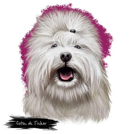 Coton de Tulear, Coton, Cotie dog digital art illustration isolated on white background. Madagascar origin toy dog companion Cute pet hand drawn portrait. Graphic clip art design for web, print