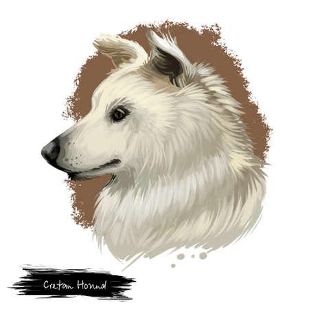Cretan Hound, Kritikos Lagonikos, Kressa Kyon, Kritikos Ichnilatis dog digital art illustration isolated on white background. Greece origin hunting dog. Cute pet hand drawn portrait. Graphic clip art
