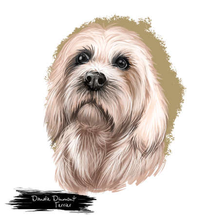 Dandie Dinmont Terrier, Hindlee Terrier dog digital art illustration isolated on white background. Scotland origin terrier dog. Cute pet hand drawn portrait. Graphic clip art design for web, print