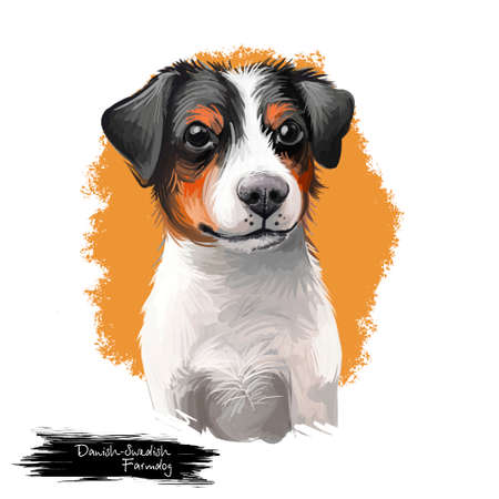 Danish–Swedish Farmdog, Scanian terrier dog digital art illustration isolated on white background. Denmark and Sweden origin guarding dog. Cute pet hand drawn portrait. Graphic clip art design