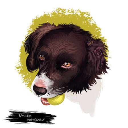 Drentsche Patrijshond, Drentscher Huhnerhund, Dutch Partridge dog digital art illustration isolated on white background. Netherlans origin dog. Cute pet hand drawn portrait. Graphic clip art design Banque d'images - 102436162