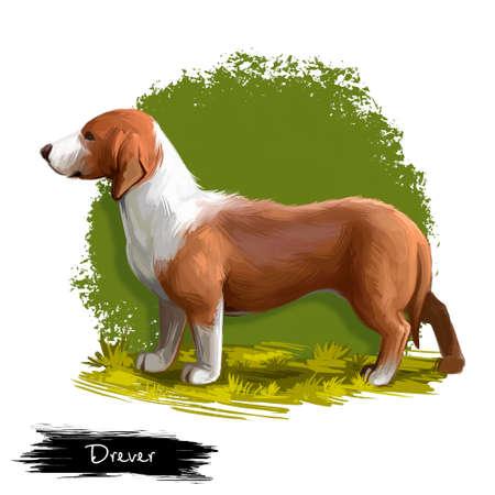 Drever, Ilustración sueca del arte digital del perro Dachsbracke aislado sobre fondo blanco. Perro sabueso de caza de origen sueco. Retrato dibujado mano linda del animal doméstico. Diseño gráfico de imágenes prediseñadas para web, impresión. Foto de archivo