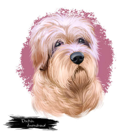 Dutch Smoushond, Dutch Ratter, Hollandse Smoushond dog digital art illustration isolated on white background. Netherlands origin hound dog. Cute pet hand drawn portrait. Graphic clip art design