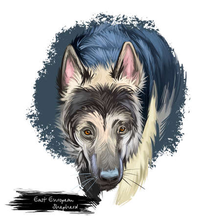 East European Shepherd, VEO dog digital art illustration isolated on white background. Soviet Union, Russia, Blarus origin guardian dog. Cute pet hand drawn portrait. Graphic clip art design 版權商用圖片