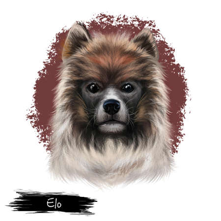 Elo dog digital art illustration isolated on white background. German origin emerging wirehaired dog. Cute family pet hand drawn portrait. Graphic clip art design for web and print