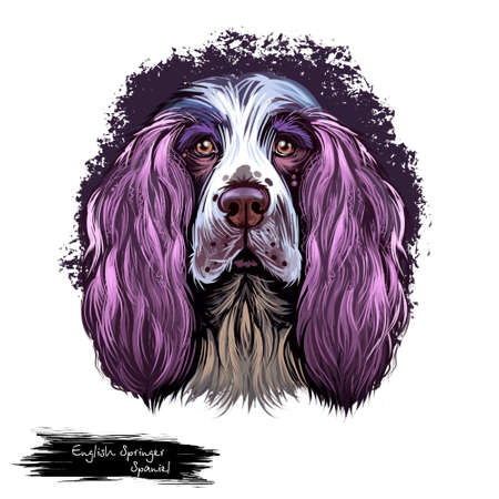 English Springer Spaniel, Springer Spaniel dog digital art illustration isolated on white background. England origin gun dog. Cute pet hand drawn portrait. Graphic clip art design for web, print