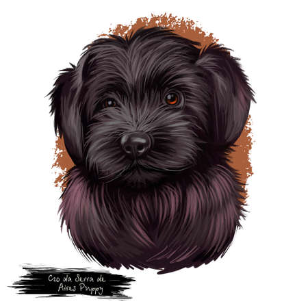 Cao da serra de aires monkey macaque dog breed. Portuguese sheepdog with black fur. Domestic medium-sized animal pet portrait isolated on white background digital art illustration