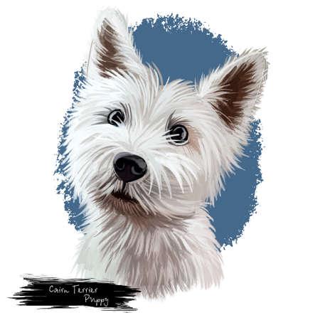 Cairn Terrier Welpenporträt. Haustiere stammen aus dem schottischen Hochland und wurden zur Hütte und Jagd gezüchtet. Haustier mit Pelzhundsäugetier lokalisiert auf digitaler Kunstillustration des weißen Hintergrunds Standard-Bild