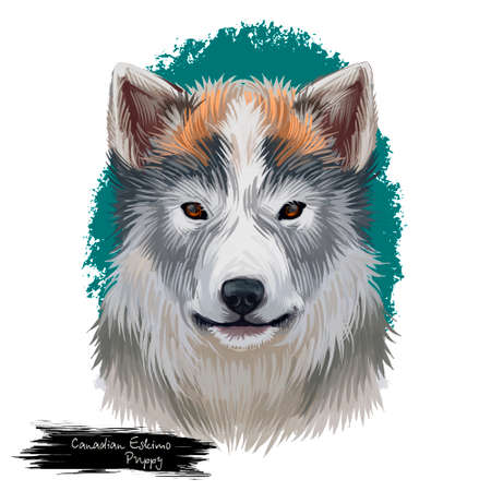 Canadian eskimo dog pet digital art illustration Banque d'images - 105330446