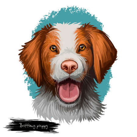 Brittany puppy dog breed isolated on white background. French pet domestic animal bred as gundog and hunting mammal. France origin of canine with long brown ears digital art illustration