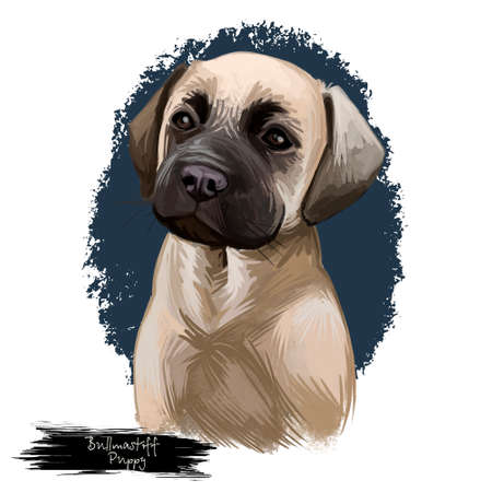 Bullmastiff puppy breed dog portrait of mammal protection master. British domestic animal with short muzzle and large-sized body isolated on white background digital art illustration Banco de Imagens