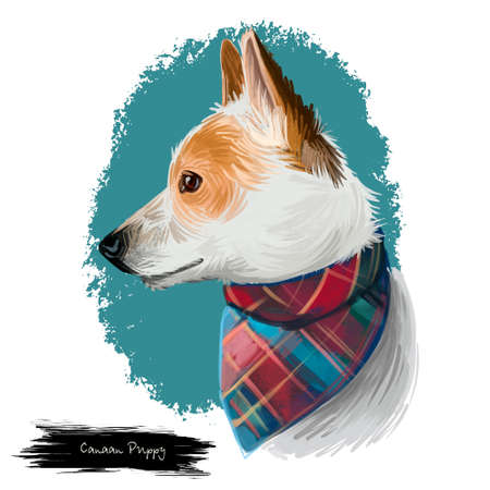 Canaan puppy pet originated in Middle East. Ancient feral dog breed with handkerchief on neck. Wedge-shaped mammals muzzle with brown fur isolated on white background digital art illustration Stockfoto - 104781912