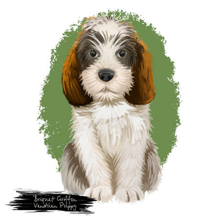 Briquet Griffon Vendeen puppy and text. Realistic dog breed of French origin pedigree purebred domestic animals. Hunting pet isolated on white background digital art illustration Фото со стока