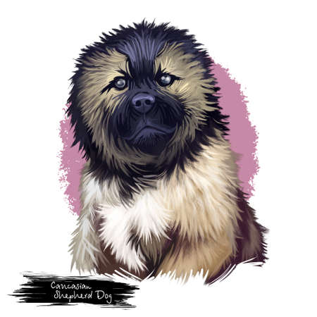 Caucasian shepherd dog breed portrait of sitting canine mammal with black and brown fur. Russian and Georgian pet of muscular type isolated on white background digital art illustration
