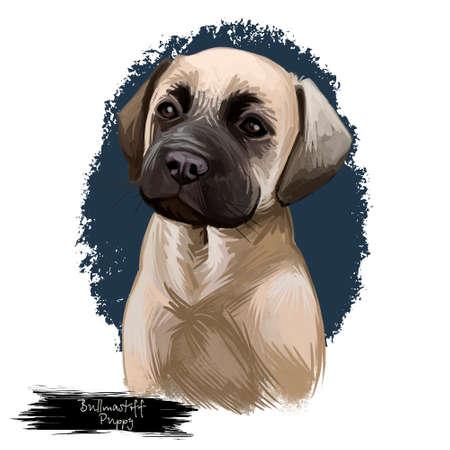 Bullmastiff puppy breed dog portrait of mammal protection master. British domestic animal with short muzzle and large-sized body isolated on white background digital art illustration Stock Photo