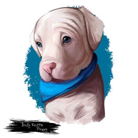 Bully kutta puppy dog breed. Strong aggressive dog Indian Pakistani Alangu type. Muscular mammal strongest canine hunting animal isolated on white background digital art illustration