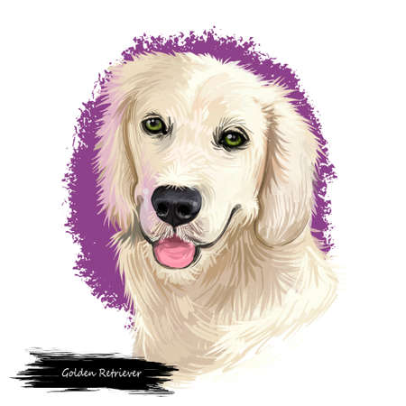 Golden Retriever dog digital art illustration isolated on white background. Scotland origin large-sized hunting, gun, sporting dog. Pet hand drawn portrait. Graphic clip art design for web, print 스톡 콘텐츠