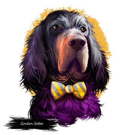Gordon Setter dog digital art illustration isolated on white background. Scotland origin large-sized hunting, gun, sporting dog. Pet hand drawn portrait. Graphic clip art design for web, print Stock Illustration - 105336056