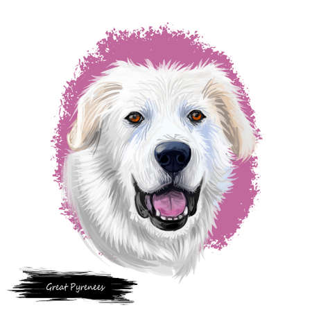 Great Pyrenees, Pyrenean Mountain, Pyr, GP, PMD dog digital art illustration isolated on white background. France, Spain origin guardian, working dog. Pet hand drawn portrait. Graphic clip art design Фото со стока