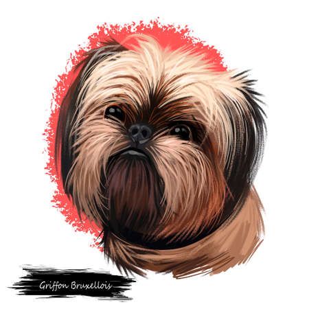 Griffon Bruxellois, Brussels Griffon, Belgium Griffon dog digital art illustration isolated on white background. Belgium origin companion dog. Pet hand drawn portrait. Graphic clip art design