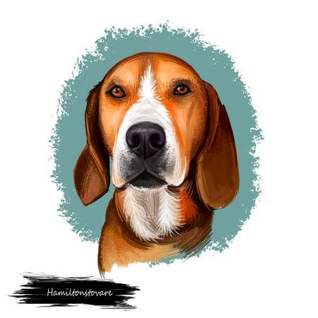Hamiltonstovare, Hamilton Hound, Swedish Foxhound, Hamilton dog digital art illustration isolated on white background. Sweden origin hunting dog. Pet hand drawn portrait. Graphic clip art design Banque d'images - 105336068