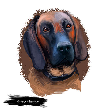 Hanover Hound, Hanoverian Hound, Hanoverian Scenthound dog digital art illustration isolated on white background. Germany origin scenthound dog. Pet hand drawn portrait. Graphic clip art design