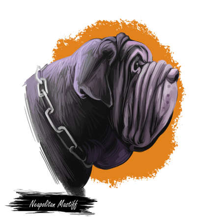 Neapolitan mastiff dog of Italian origin wearing collar in form of chain digital art. Isolated pet watercolor portrait animal mammal from Italy. Animalistic being, face of beast poster with text Stockfoto