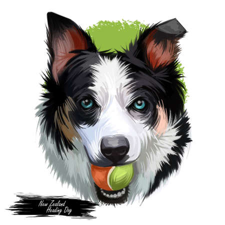 New Zealand heading dog, poster digital art. Isolated waterclor portrait of puppy holding ball in teeth. Playing doggy purebread, animalistic being playful animal. Canine hound with long ears Stok Fotoğraf