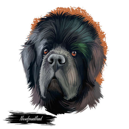 Newfoundland dog with big muzzle watercolor portrait, poster with text. Digital art of purebred canine origitated from Canada and England. Hound with long fur, furry animal with kind hazel eyes Stock Photo