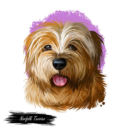 Norfolk terrier, watercolor portrait of canis lupus familiaris digital art. Dog originated from Great Britain, England origin. Hound sticking out tongue, poster with text and mammal purebred