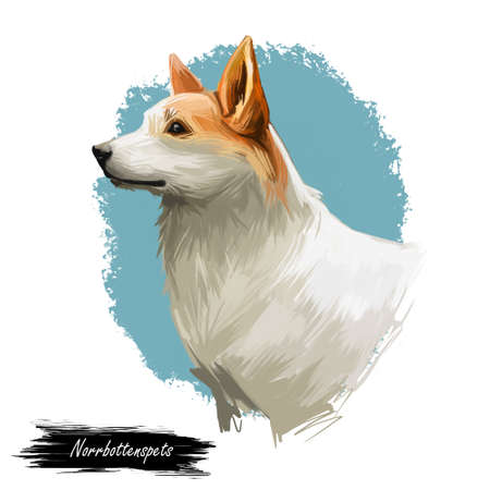 Norrbottenspets dog purebred with long ears, digital art isolated. Portrait of mammal domestic animal of spitz type. Sweden origin of puppy, Scandinavian canine with small muzzle well poised pet