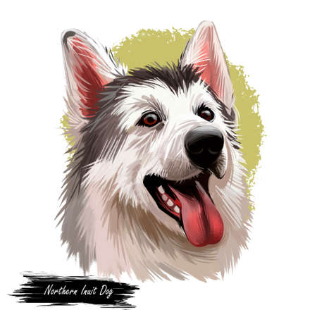 Northern inuit dog, watercolor portrait of canis lupus familiaris closeup digital art. Isolated puppy of England origin showing sharp teeth and long tongue. Canine doggy with furry muzzle poster