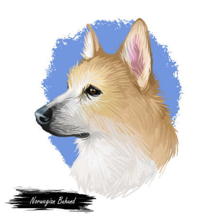 Norwegian, buhund canine originated from Scandinavia, digital art. Isolated puppy from Norway poster with text and breed name. Purebred domestic animal, pet mammal, having long muzzle watercolor