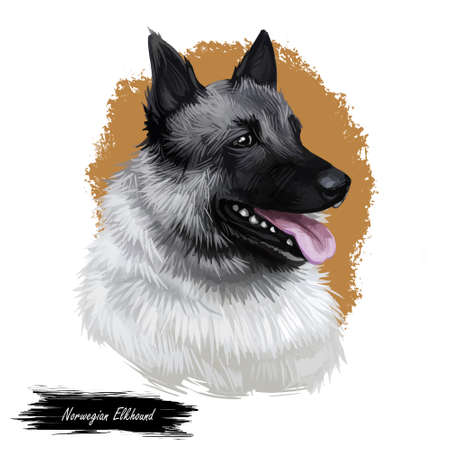 Norwegian elkhound, domestic mammal of spitz type digital art. Isolated watercolor portrait, dog originated from Norway. Canine from Scandinavia, breed showing teeth and tongue, canine animal pet