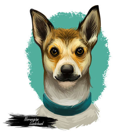Norwegian lundehund wearing collar front view of pet digital art. Isolated watercolor portrait of domestic mammal of Scandinavian origin. Hound canine of unique and rare breed, animal type poster