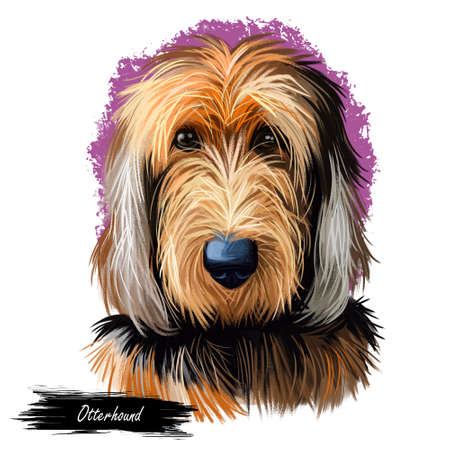 Otterhound pet having long fur isolated watercolor portrait digital art. Canis lupus familiaris pet, domesticated animal originating from England United Kingdom. Canine poster with text breed name