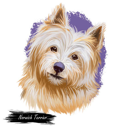 Norwich terrier pet with long fur and kind muzzle digital art. Canis lupus familiaris, pet of United Kingdom origin, watercolor portrait and text breed name. Domestic animal canine doggy hound