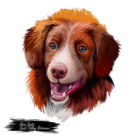Nova Scotia duck tolling retriever dog watercolor portrait digital art. Poster with pet breed name, purebred showing teeth and tongue. Canine domestic, doggy animal with opened mouth big ears