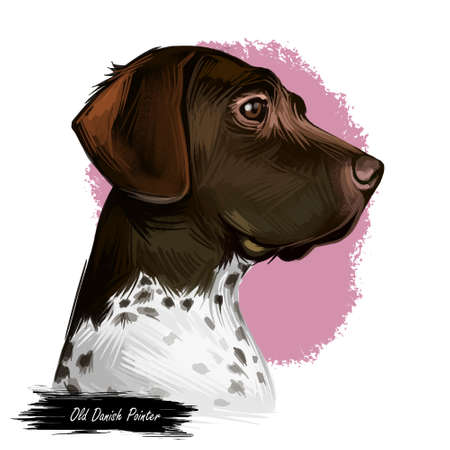 Old Danish pointer dog with spots on short fur isolated digital art. Pet originated from Denmark Scandinavian puppy. Poster with text and portrait of canine looking in distance Scandinavia animal