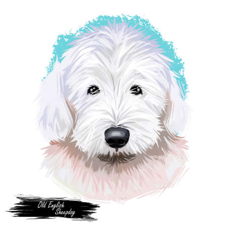 Old English sheepdog used to watch livestock at farms isolated digital art illustration. England originated pet from United Kingdom. Puppy domestic animal with long fur, furry muzzle of canine hound
