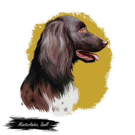 Munsterlander small, German dog digital art illustration. Hunting pointing and retrieving type of purebred animals. Portrait closeup, profile of canine from Munster region isolated vorstehhund. Banque d'images - 109735689