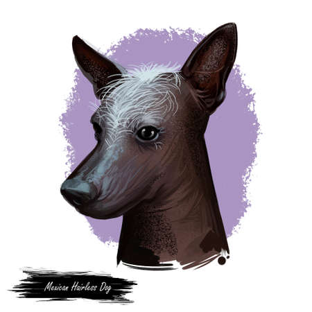 Mexican hairless dog, breed xoloitzcuintli, digital art illustration. Xoloitzcuintli xolo pet purebred of standard size. Mexico originated hound with no hair, portrait closeup isolated on purple