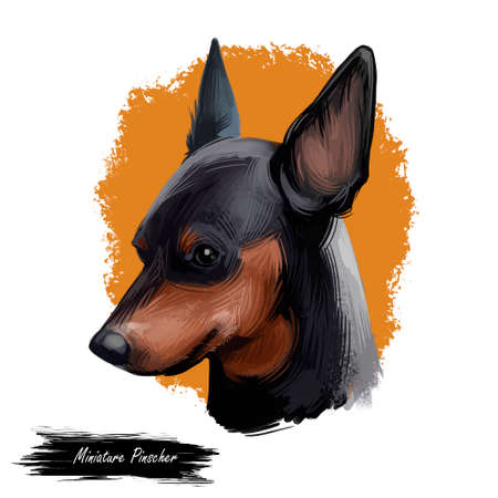 Miniature pinscher, German dog breed digital art illustration. Profile portrait of canine originated in Germany. Min pin hound, zwergpinscher type of animals with long ears. Pet isolated on brown Фото со стока