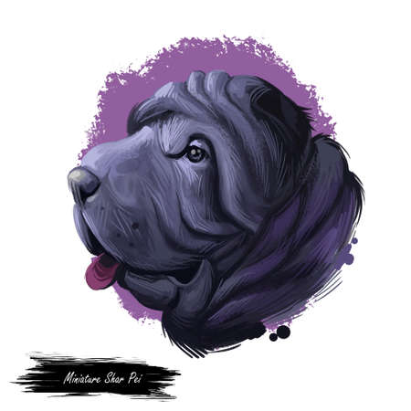 Miniature mini shar pei dog, profile portrait digital art illustration. Pet bred from recessive gene of shar-pei, Chinese originated puppy. Animal from China with wide padded muzzle, highly set ears. Banque d'images - 109735691