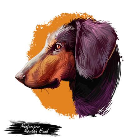Montenegrin mountain hound, dog of crnogorski planinski goni breed digital art illustration. Pet from Montenegro called Yugoslavian. Animal has smooth coat, hunting and working doggy canine.