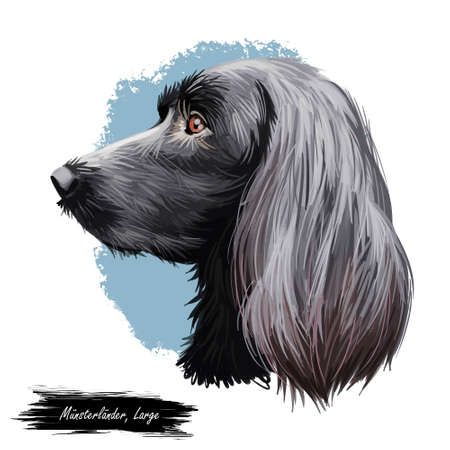 Munsterlander large, German originated dog digital art illustration portrait. Profile closeup of breed purebred offshoot of the longhaired pointer, puppy with long ears. Athletic intelligent doggy. Banque d'images - 109735693